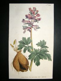 Curtis 1793 Hand Col Botanical Print. Hollow Rooted Fumitory 232
